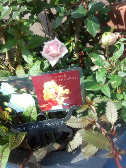 ベルバラをイメージした薔薇の展示がされていた