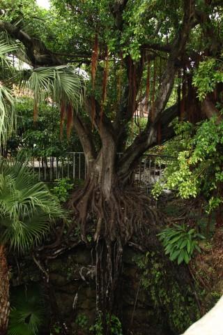 壕の上に生えた木